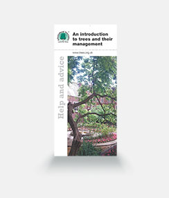 An Introduction to Trees and their Management Leaflet - 100 copies